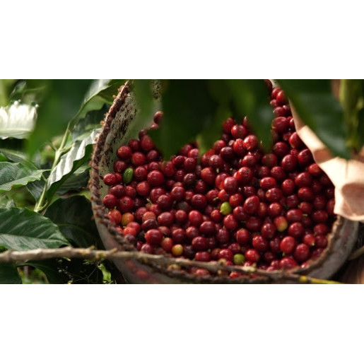 Brazilia Sitio Morada do Sol 1kg | Natural Uscată